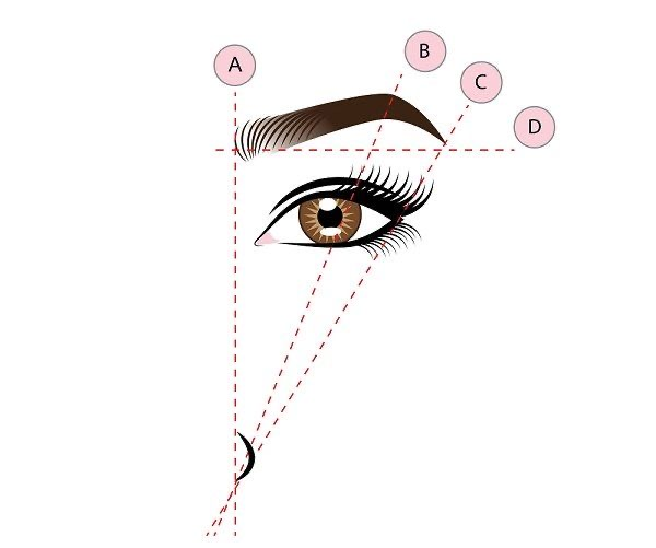 ¿Cómo medir la forma de las cejas?